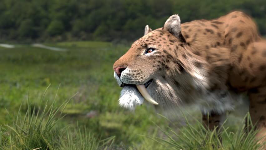 Smilodon shows his teeth   Shutterstock HD Video #21186178