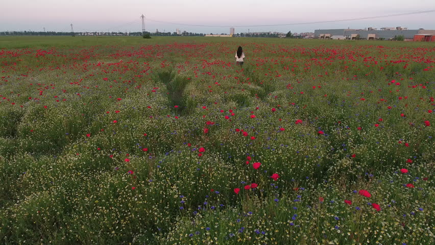 Aerial view of a beautiful woman traditional dressed, with long brunette hair having fun outdoors in the poppies field. Happy smiling young woman enjoying nature | Shutterstock HD Video #21754408