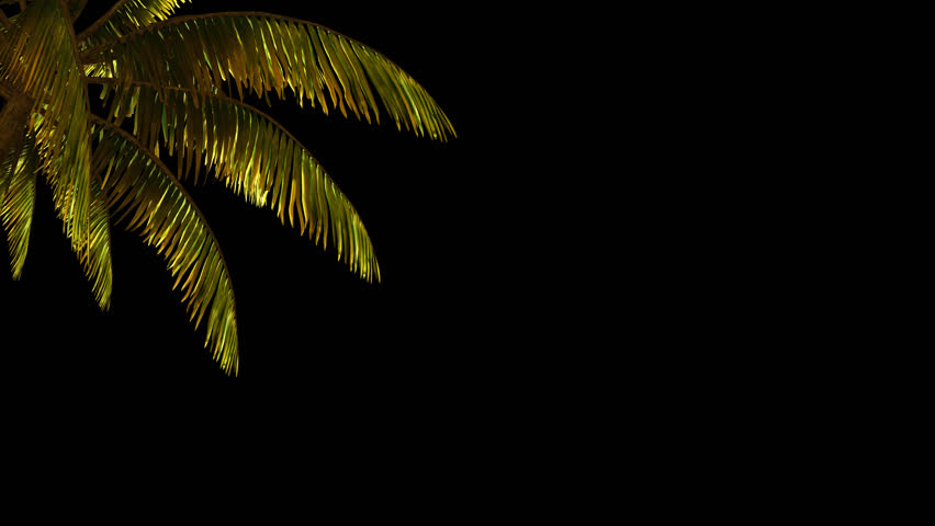 The branch of palm, palm tree in the wind. With alpha channel. File format - mov. Codeck-PNG+Alpha | Shutterstock HD Video #21763102