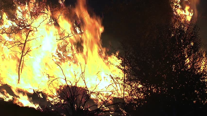 This is the real forest fire video.Fire in the forest. #21813748