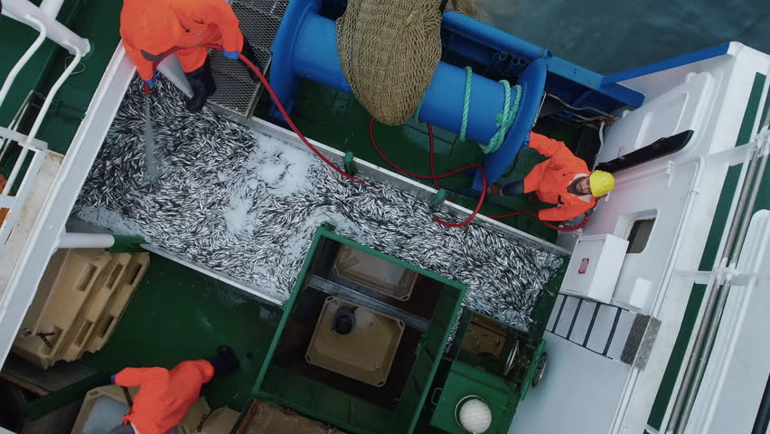 Flying Over a Commercial Fishing Ship where People processing the Fish. Top down view. Shot on Phantom 4K UHD Camera.