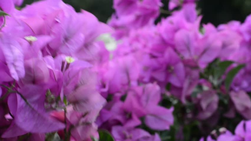 Flowers is blown by the wind. | Shutterstock HD Video #22087318