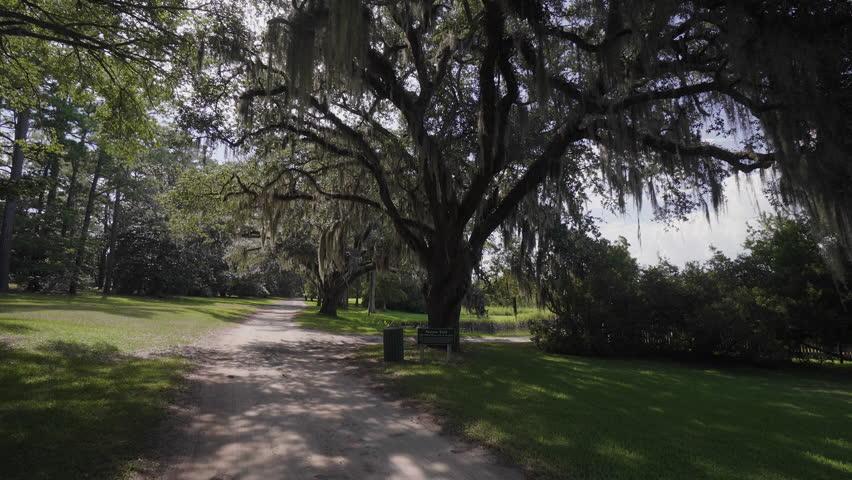 The Giant Oaks Of Brookgreen Gardens Myrtle Beach South Carolina Usa Jul