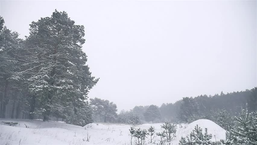 Snowstorm The Woods Snowing Blizzard Winter, Christmas Tree Nature And Pine  Forest Landscape   HD