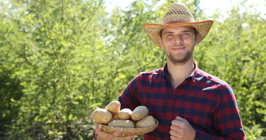 Gardener Farmer Man Holding Brown Potato Vegetables Harvest Show ...