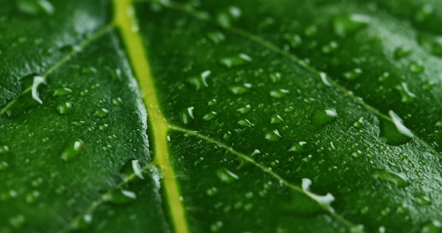 Macro shot of green leaves with drops of dew water over. Autumn concept, forest, trees, forest, rain, freshness