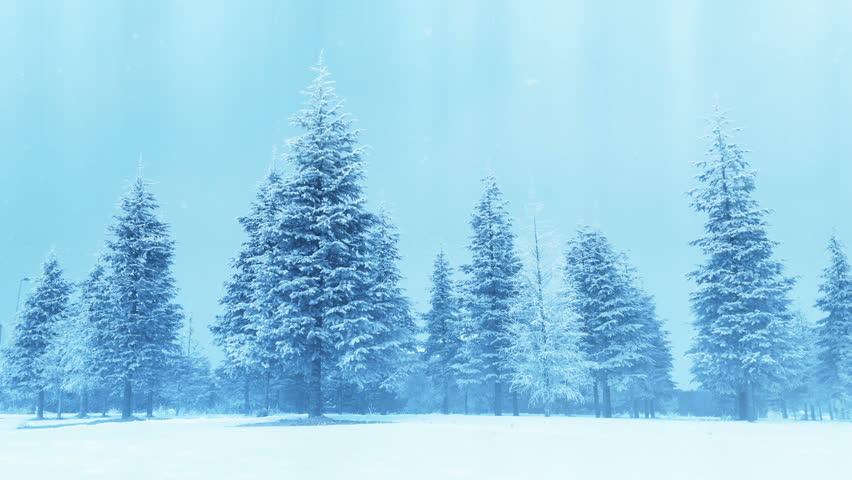 Holiday tree | Shutterstock HD Video #22463878