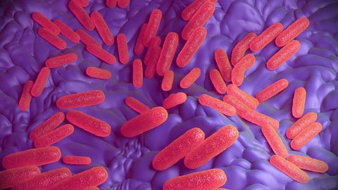 Salmonella bacteria or Salmonella enterica, are Gram-negative, rod-shaped cells. Salmonella is a major cause of food poisoning in humans, most commonly caught from infected pork, poultry and eggs