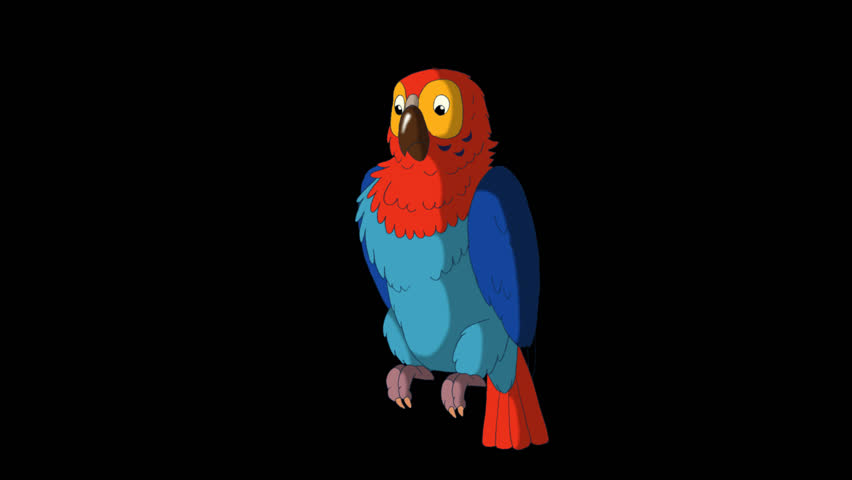 Colorful Parrot Gets Angry. Animated footage with alpha channel. Looped motion graphic.