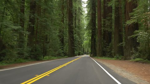 Point-of-view driving on Avenue of the Giants through a portion of Humboldt Redwoods State Park, California.