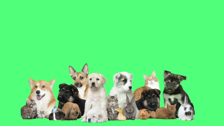 funny pets  on a green background