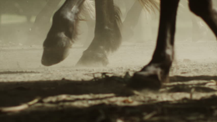 Horses Running Stampede   Shutterstock HD Video #23557279