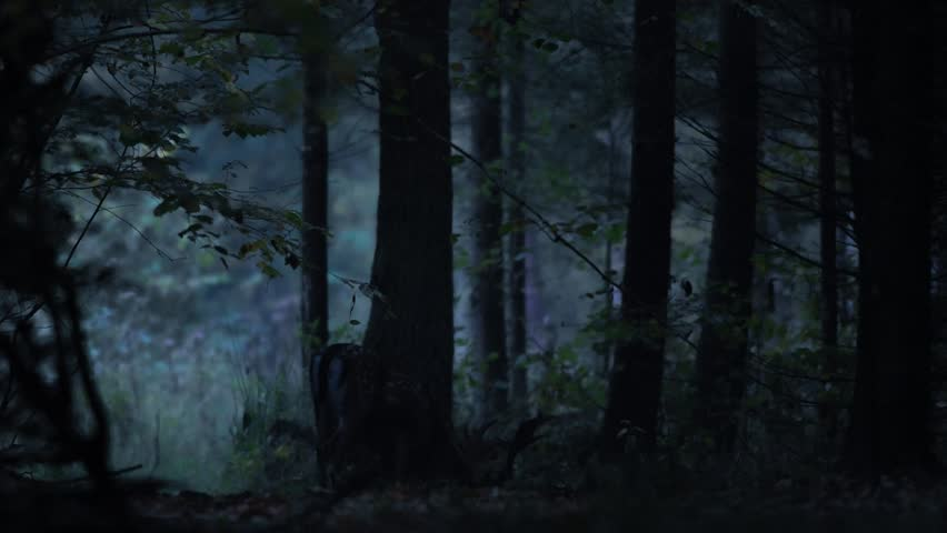 Deer walking in the night forest.