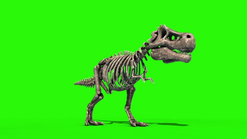 TRex Skeleton Attack Front Jurassic World 3D Rendering green Screen