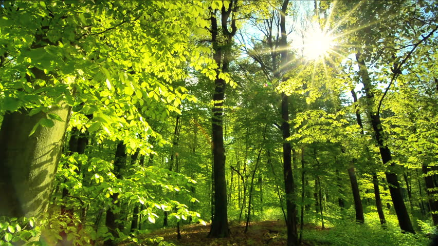 Beautiful sun rays fall through fresh green foliage in a beech forest at spring, slow dolly shot