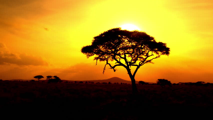 AERIAL CLOSE UP: Distancing from stunning acacia tree canopy at dramatic, golden light, bonfire-red and sunflame-gold sunset in breathtaking African savannah grassland woodland in pristine wilderness