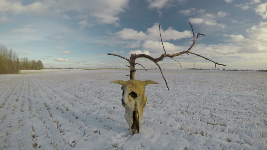 dead dry tree and cow cranium skull on snowy winter farmland field and clouds motion, time lapse 4K