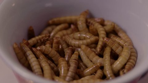 A close up shot of live mealworms in a small white bowl