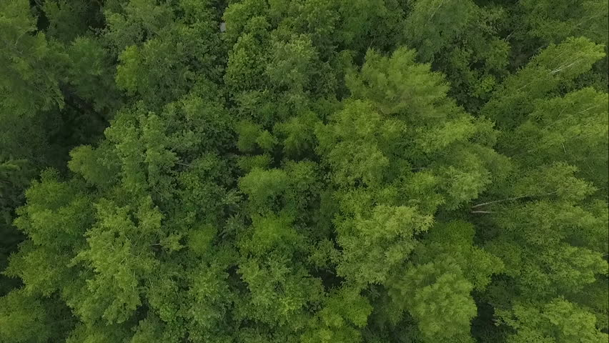 Aerial drone shot over the north european forest. Drone spinning. | Shutterstock HD Video #24545858