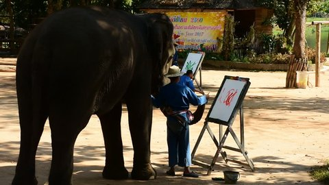 LAMPANG,THAILAND-January 29 : Elephant show painting on paper at Thai Elephant Conservation Center Lampang,Thailand on January 29, 2017