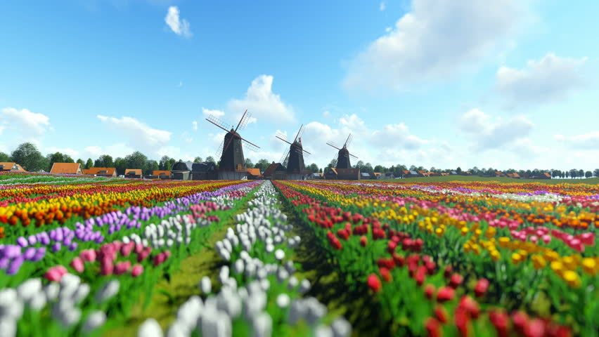 Traditional Dutch windmills with vibrant tulips in the foreground over blue sky, panning | Shutterstock HD Video #24692708