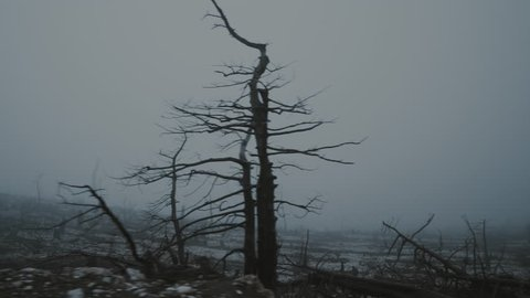 4K Pov moving shot of barren land,burned out forest in mist and fog.Pov gimbal stabilized view of a ravaged and scorched forest landscape in heavy fog and mist.Dark overcast weather,gimbal/dolly shot.