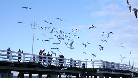 SOPOT, POLAND - MAR 12, 2017: Wooden pier people tourists feed Baltic Sea gulls slow motion