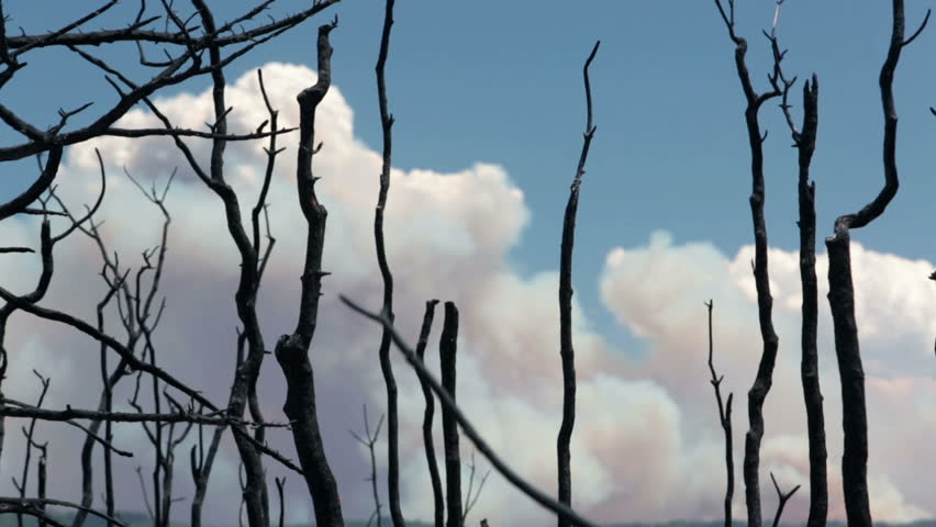 Forest fire smoke dead burnt trees. Dangerous and destructive blaze destroyed dozens of homes and caused death. Wood Hollow Utah. FEMA Government assistance. Drought strong summer winds