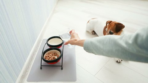 dog is anxiously nervous waiting for food. Hand woman mistress of a woman pours dry food pellets in a bowl, pours water from a glass. The dog eats eagerly. Video footage.