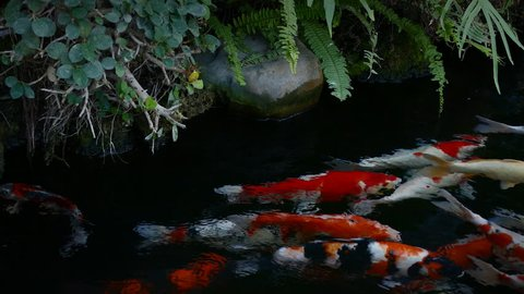 Twilight In Koi Pond >> Winter Forest Twilight Flashing Colorful Stock Footage Video 100