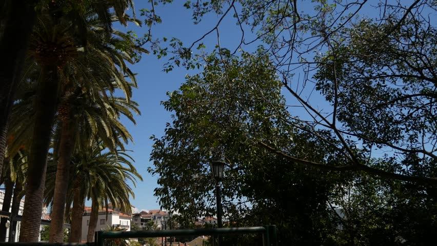 A huge white multi-storey estate in palm trees. Herceg Novi, Montenegro.