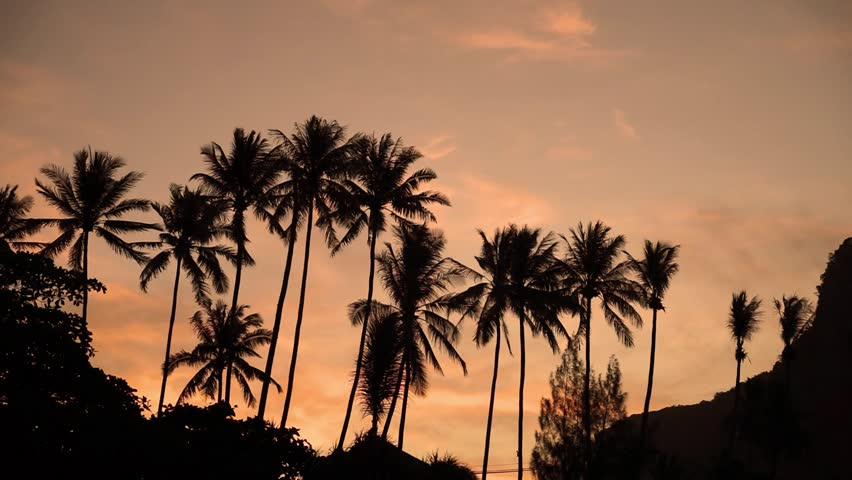 Palm silhouettes on summer sunset with beautiful sky background | Shutterstock HD Video #25446518