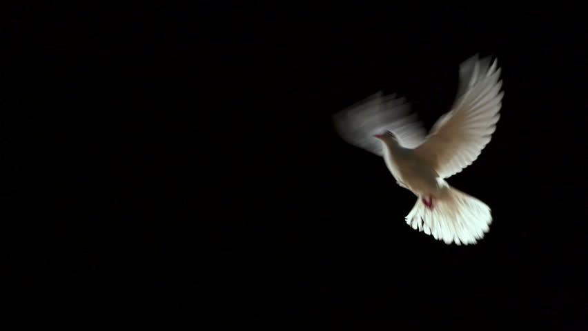 Header of dove
