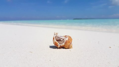 Hermit crab on white sand beach holiday in Maldives background