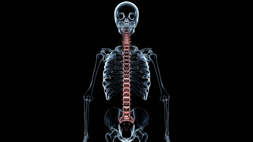 Spine Male Anatomy Organ Scan Stock Footage Video (100% Royalty-free ...
