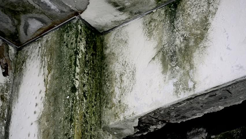damage wall mold, green and black fungus