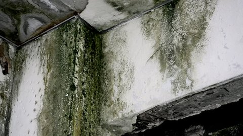 damage wall mold, green and black fungus