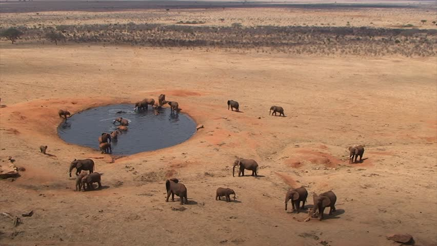 "Group of elephants at a waterhole in the Kenyan National Park ""Tsavo East"""