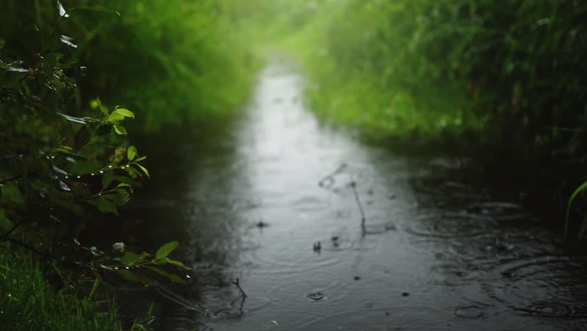 Warm Summer Rain In The Green Park. 4k resolution. Best Nature Backgrounds