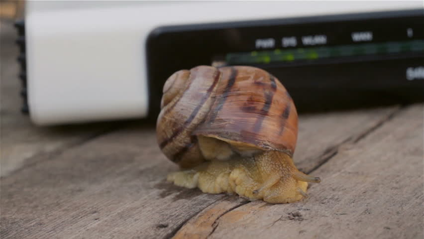 Close-up Snail slowly crawling near a WI-FI router. Low speed Internet