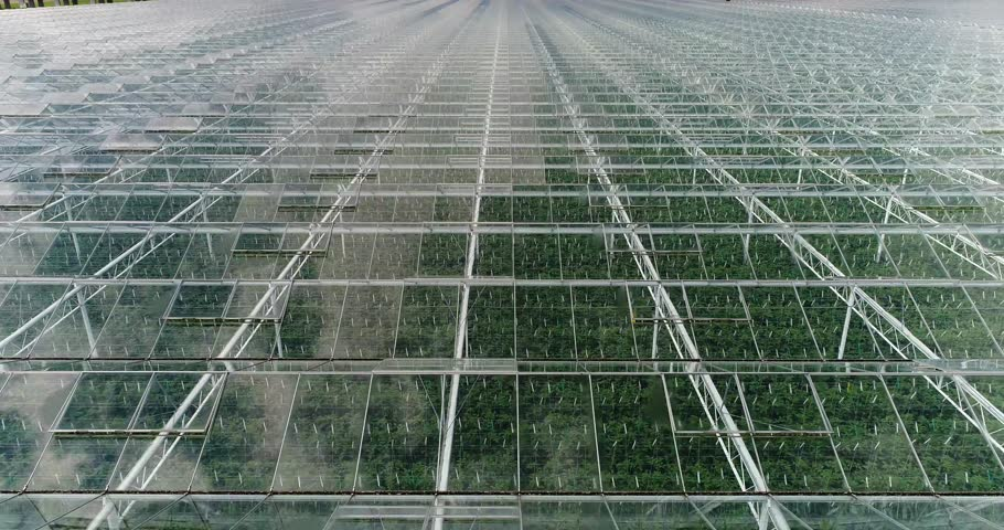 Aerial or flying over the greenhouses. You can look intro the greenhouse through the glass.