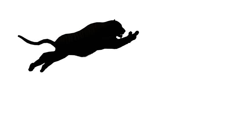 Tiger jumped to attack prey sketch silhouette,wildlife animals habitat. cg_02106 | Shutterstock HD Video #26538728