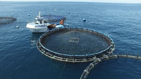 Fish circle factory. Round fishes farm. Industrial fish grow next to huge cliffs. Drone image around the nets.