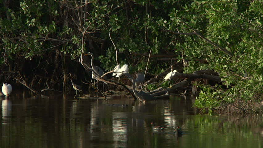 bio 100 florida national everglades Buy the complete 58 national parks in 51 surround sound on dvd: llectors-edition.