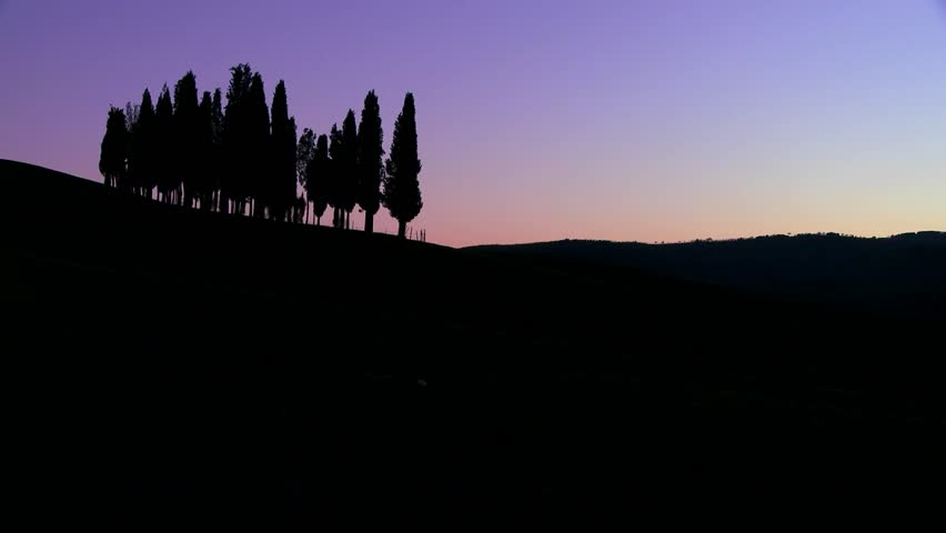 TUSCANY, ITALY-CIRCA 2011-A cluster of Italian cypress trees at dusk on a hillside in Tuscany, Italy.