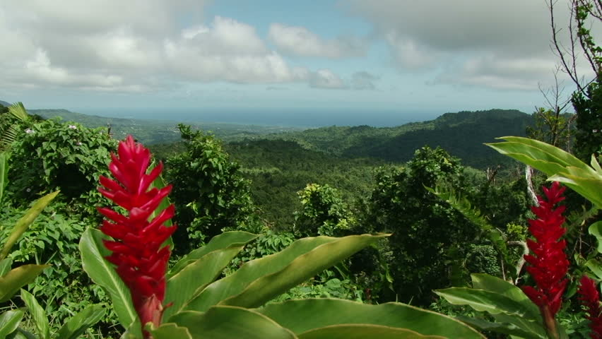 Elevated view of rainforest and sea with red ginger plant in front in Grenada