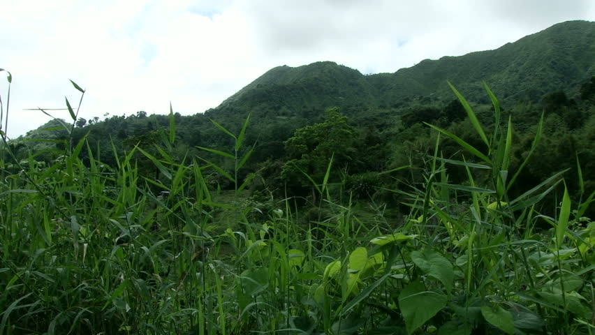 Slow pan across mountain and rainforest in Grenada. Green grass in front