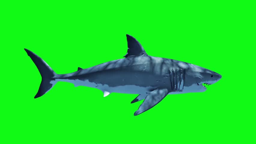 White Shark Attack Loop Side Green Screen 3D Rendering Animation #27019318