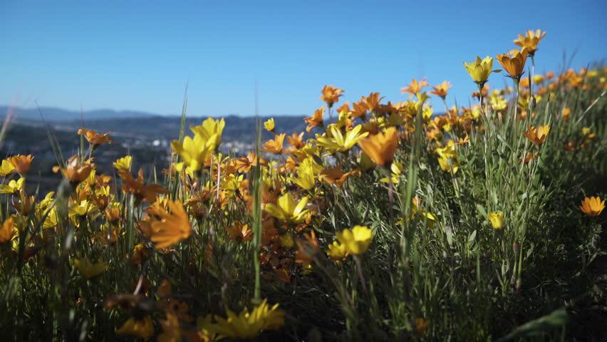 Flowers on a Hillside | Shutterstock HD Video #27151018