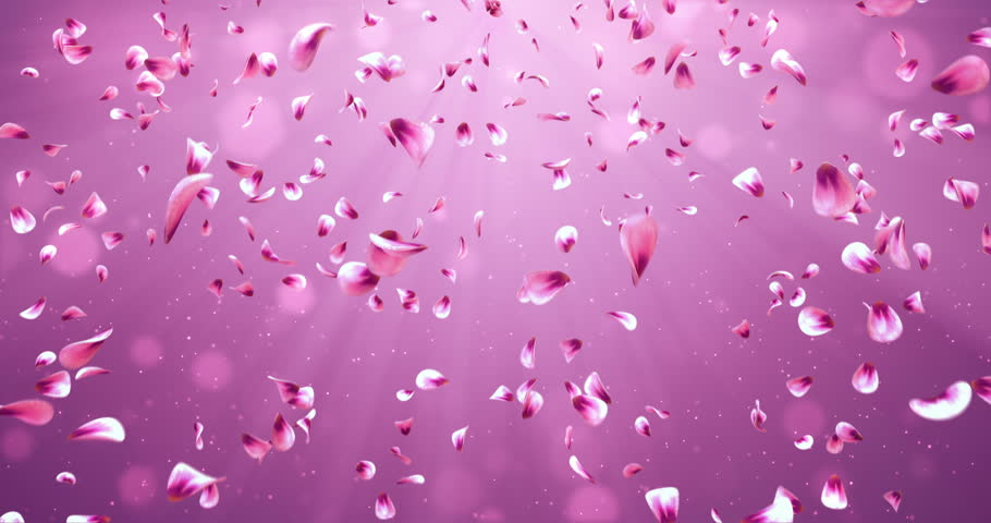 Falling red pink purple yellow sakura flower petals with light animation of romantic flying red pink rose sakura flower petals backdrop for st valentines day stopboris Image collections